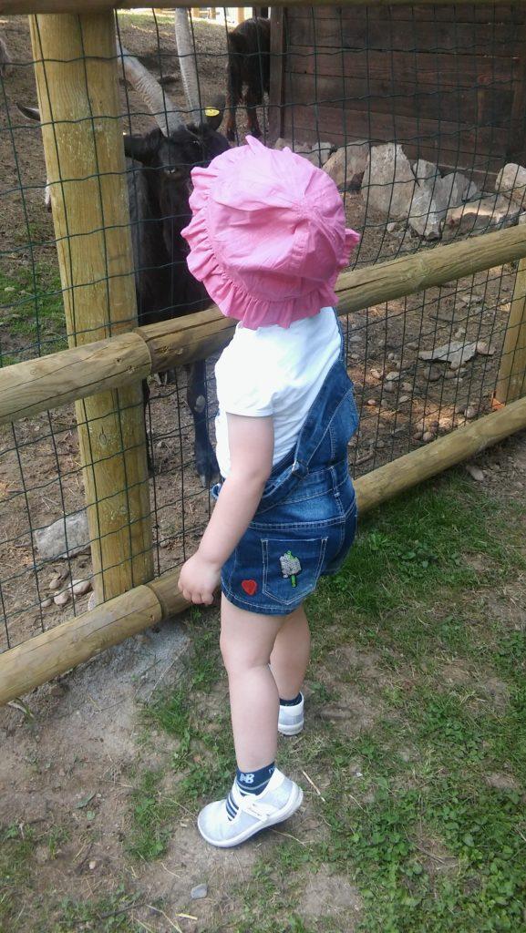 paola capretta leolandia